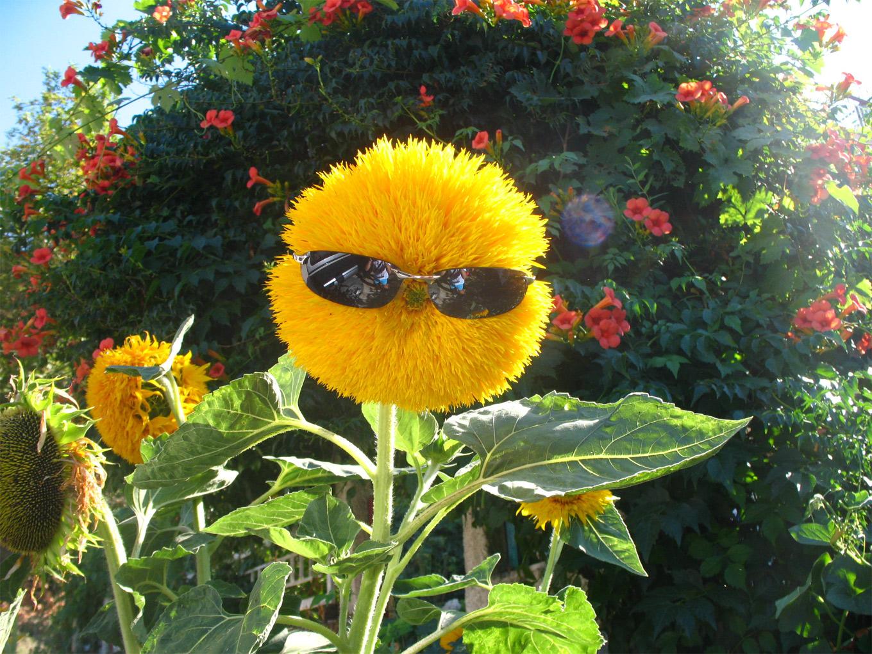 Смешная картинка цветочек, вечера